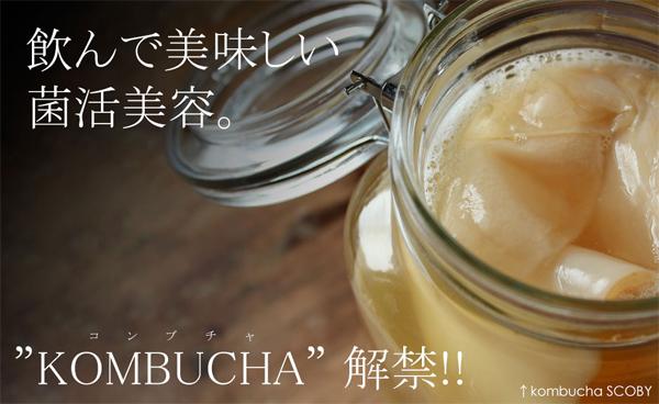 KOMBUCHA・コンブチャ
